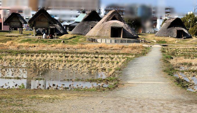竪穴式住居12棟、高床式倉庫2棟、そして祭殿まである集落跡