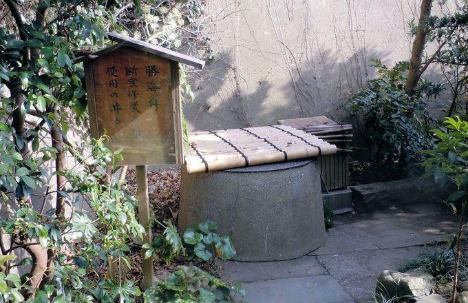 今でも怪しい鳴き声を立てて野生のリスが生息する、「東叶神社」の裏山。