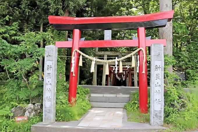 「これが全国的に評判の金運パワースポット?」と思うほど、こじんまりした神社が静かな森の中に!