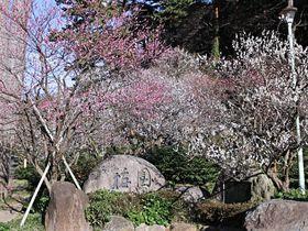 むせる様な梅の香りに包まれて早春を満喫しよう!「熱海梅園」