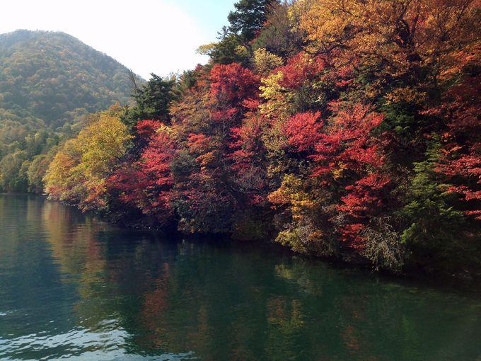 奥日光随一の紅葉の名所「八丁出島」を間近で眺められるのは船だけ!