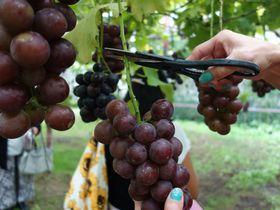 フルーツ狩りが1年中!美味しさいっぱい「原田農園」で旬の収穫体験を満喫しよう