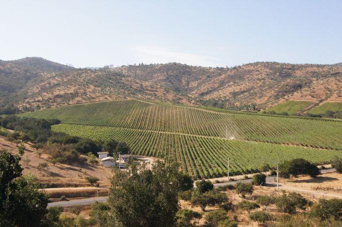 まだ新しいワイン産地 サンアントニオ・ヴァレー