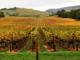 ヤッラバレーおすすめワイナリー6選〜メルボルン至近、本場で飲むワインは格別!