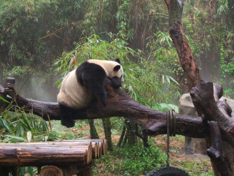 動物数も広さも桁違い!中国広州の動物園「チャイムロング・サファリパーク」