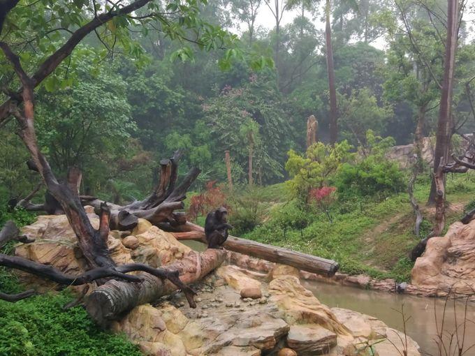 徒歩で周る動物園エリア