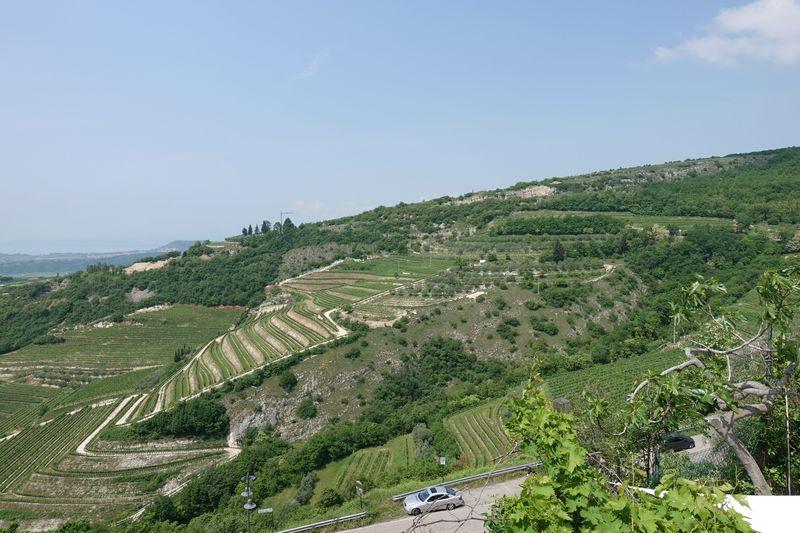 赤ワインの銘醸地!イタリア・ヴァルポリチェッラのワイナリー4選