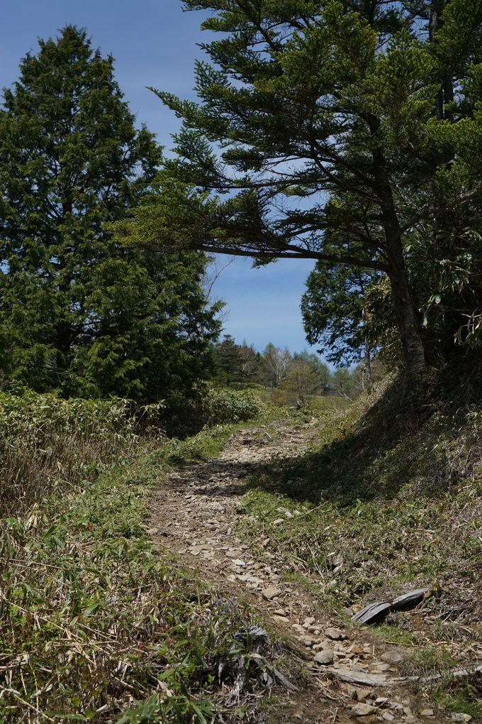 約1300年前の古道「東山道」をトレッキング