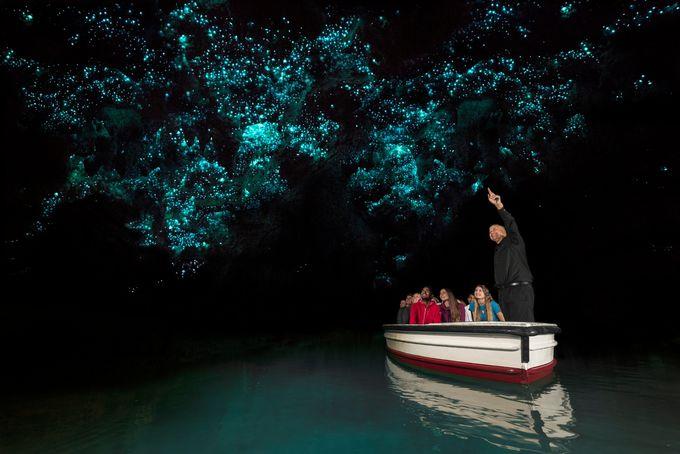 ワイモト地区の人気洞窟「ワイモト洞窟」で土ボタルの光を