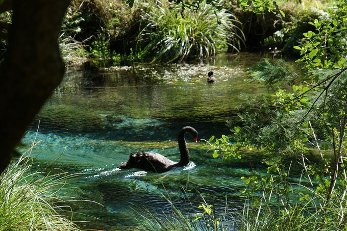 豊富な湧水と周辺散策「ハムラナ・スプリング・レクレーション森林公園」