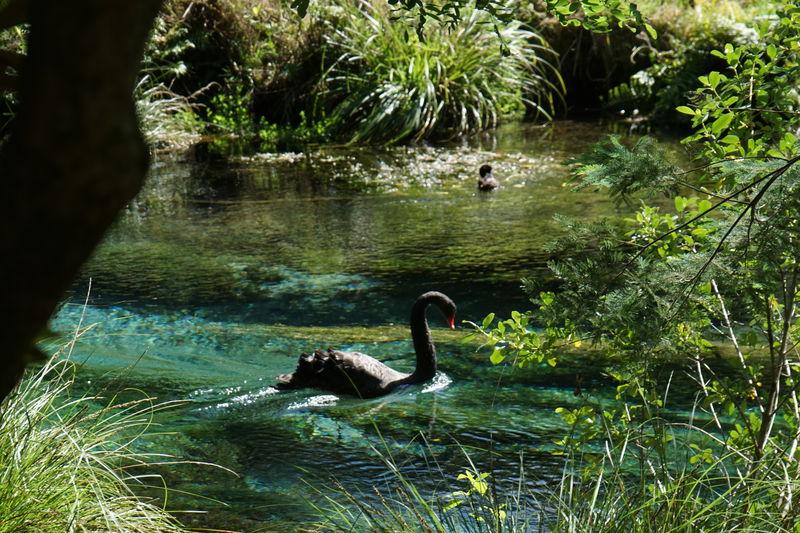 ニュージーランド北島で大自然を体感!必見3スポットめぐり