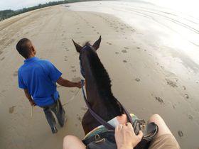 コタキナバルを遊びつくす「シャングリララサリア」自然保護区で乗馬にトレッキング!