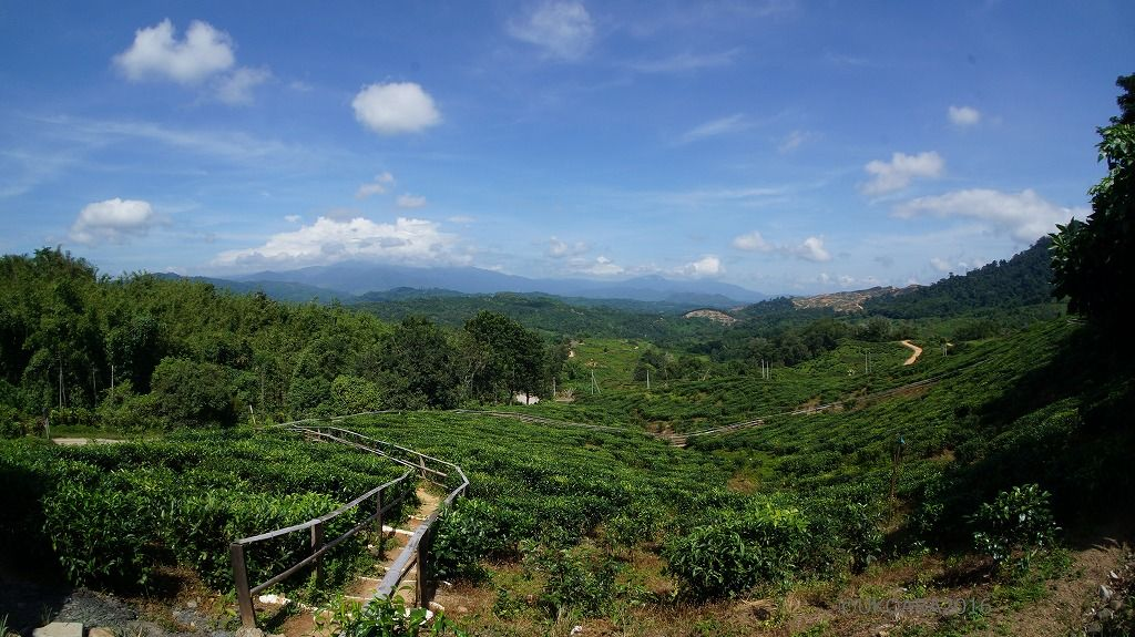 キナバル山の麓「サバティーガーデン」