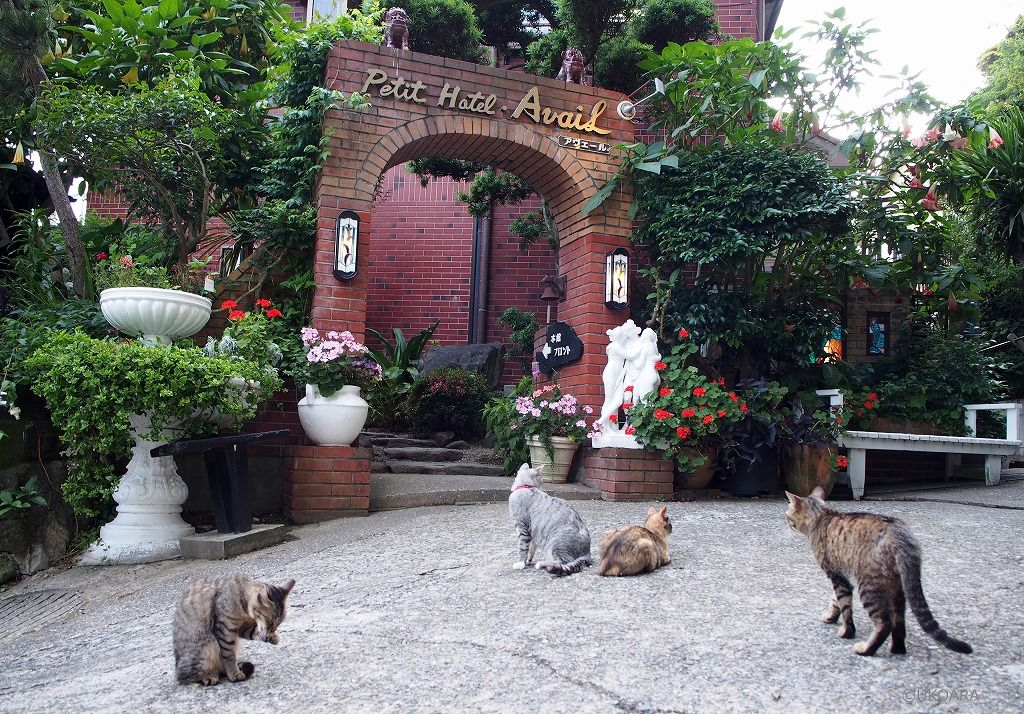 12匹の看板猫がいるホテル!?「アヴェール」で南房総グルメに舌鼓