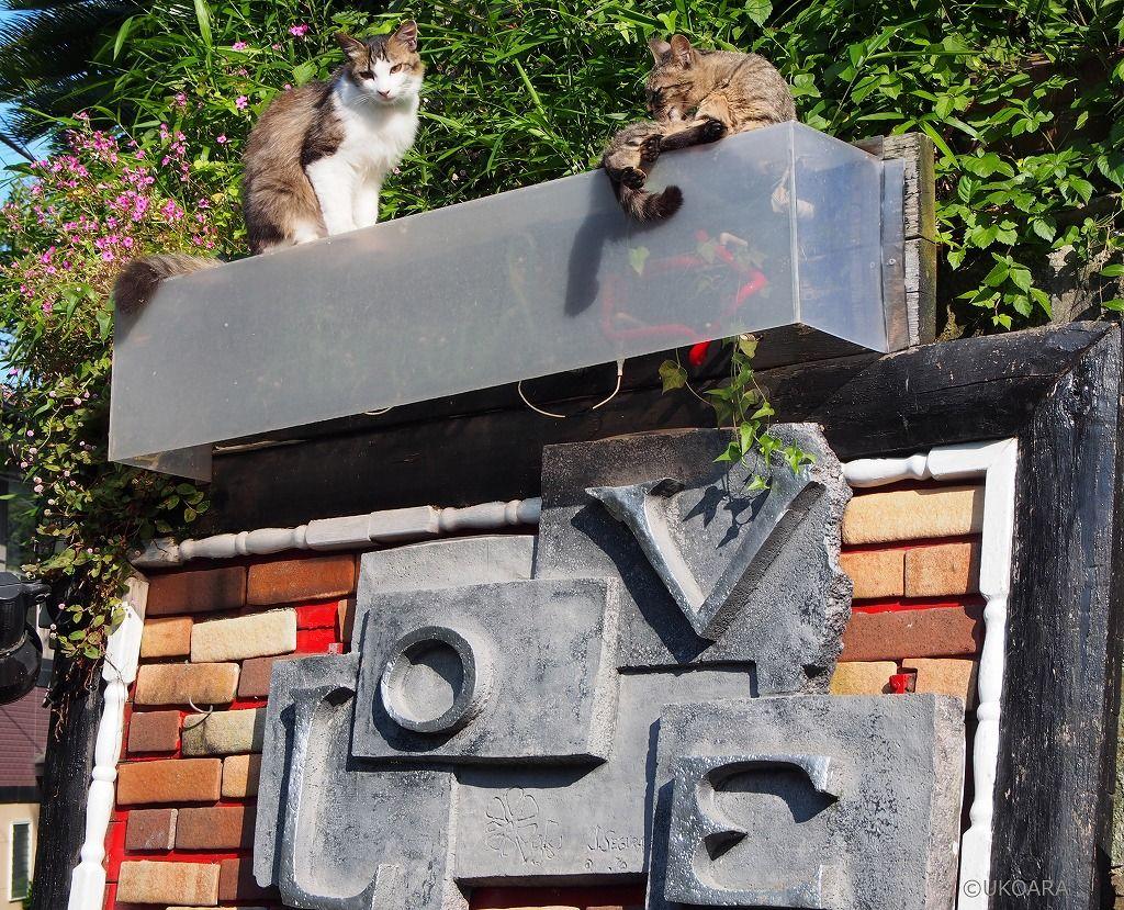 猫好きにはたまらない!12匹の猫がお出迎え