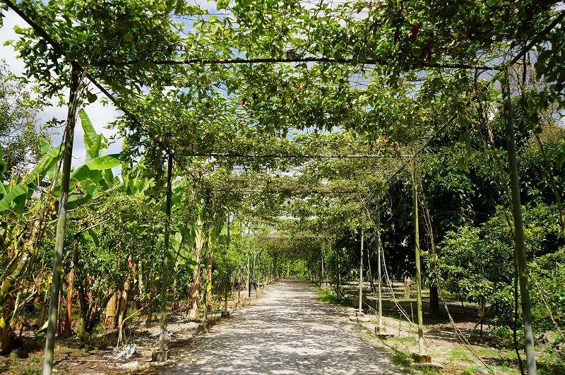 この木何の木?100種類以上のトロピカルフルーツ&ハーブ農園