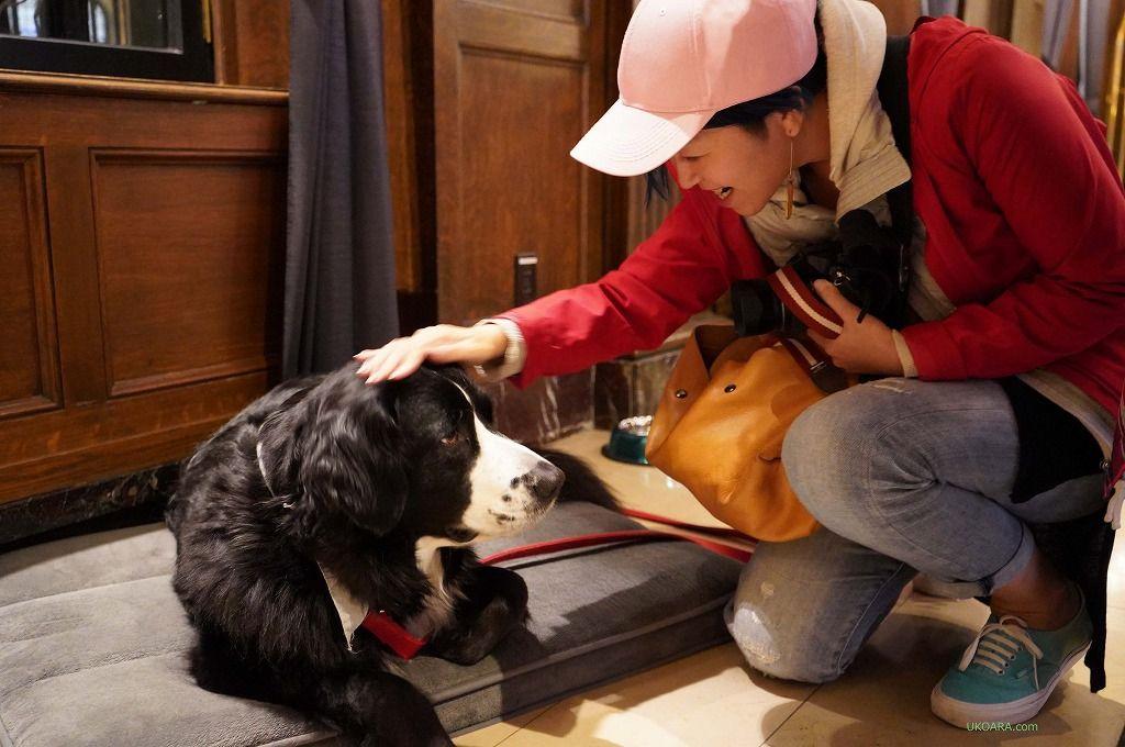 アンバサダー犬ダフィネに会えるかも!