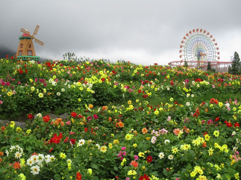 百花繚乱!富士山に天空の花園が出現!ぐりんぱ&富士 花めぐりの里