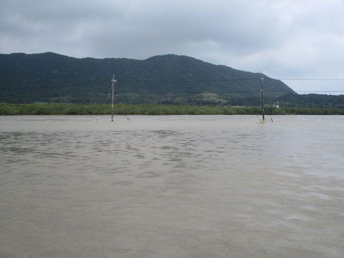 なんと海の中に電柱が!台風が来ても倒れない!