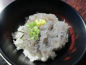 極上「生しらす丼」VS「赤富士丼」静岡・田子の浦港のマストフード!