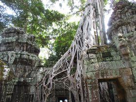 アノ映画のロケ地!密林に眠るアンコール遺跡「タ・プローム」