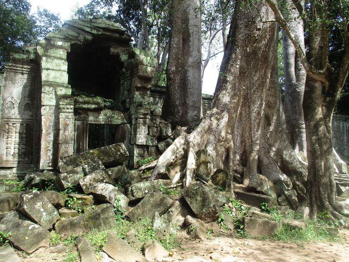 2.密林に埋もれた遺跡を探検(カンボジア)