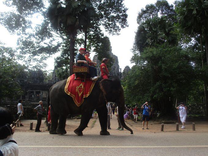 王様のように楽しむ!バイヨン寺院で象乗り体験!