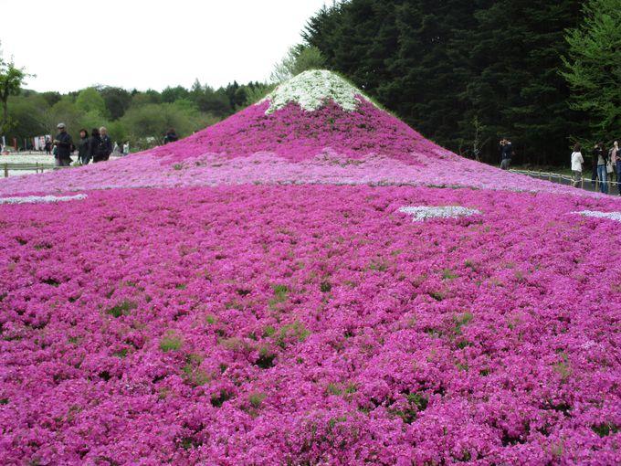 芝桜でできたミニ富士山を会場内で発見!