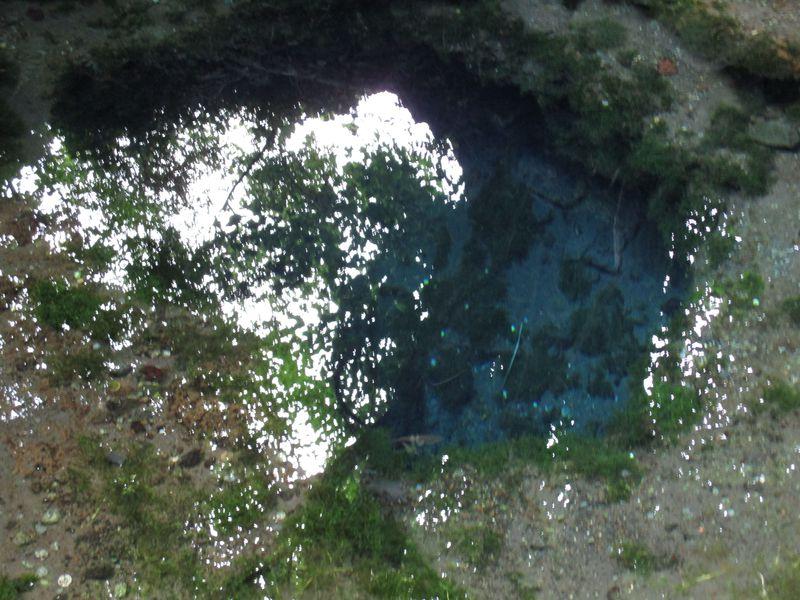 きれいな「青」はあちこちに!そして足の下には水脈が迷路のように