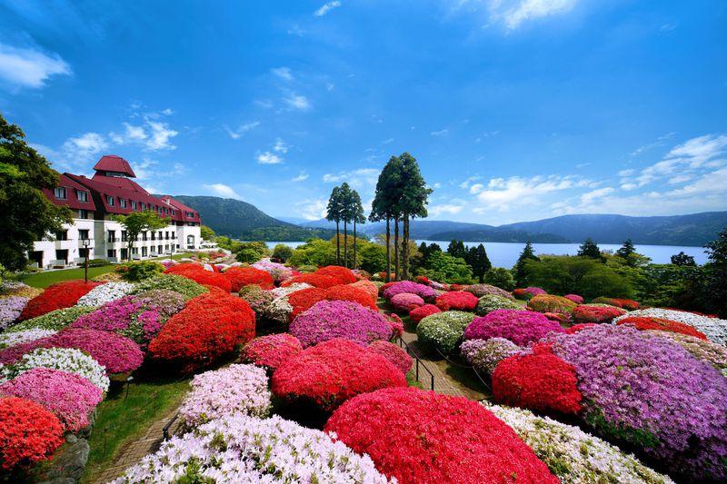 必見の100年つつじ!箱根「小田急 山のホテル」つつじ庭園