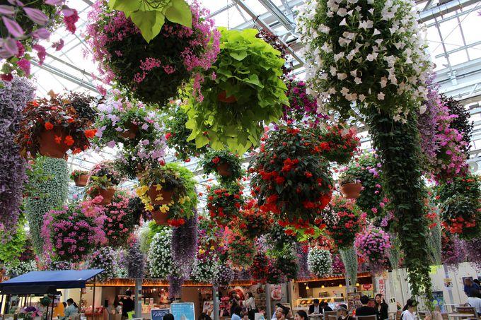 天井を埋め尽くす花のシャンデリアはインスタ映え!