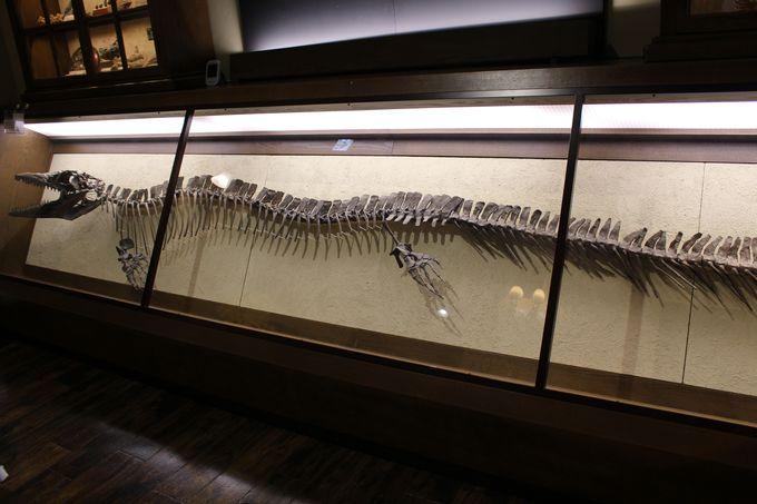 なんと、恐竜の糞石も!