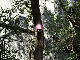 恋愛運がアップ!?三島「楽寿園」でハートの木を探す!