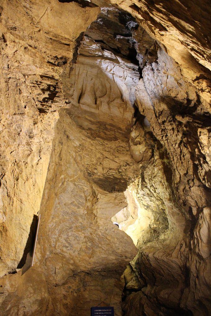 東海地方最大級の鍾乳洞「竜ヶ岩洞」