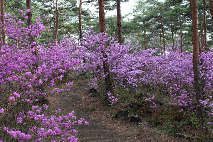 地面にぽっかり、深さ約3メートルの溶岩樹型。春にはつつじも!