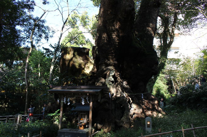 一年の始まりに樹齢2100年の大楠にパワーをもらう!