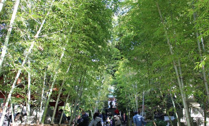 巨大な大楠も!初詣は熱海・來宮神社へ!