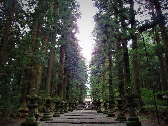 これぞ神域!「北口本宮冨士浅間神社」で深山幽谷の雰囲気を味わう