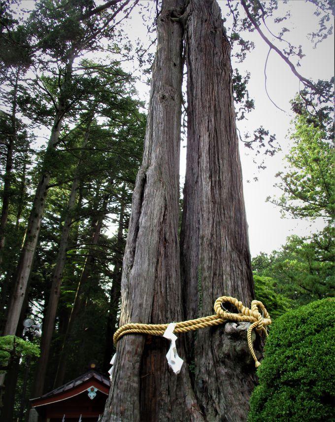 厳粛?荘厳?樹齢数百年の大木の参道を歩く!