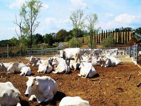 """農場体験もできる""""IL FORTETO""""イタリア・トスカーナ州の美味しい食品を生産者から直接購入!"""