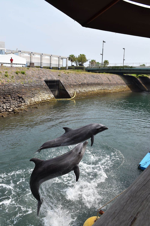 イルカが川で泳いでる!?イルカ水路で、自由に泳ぐ可愛い姿にキュン。