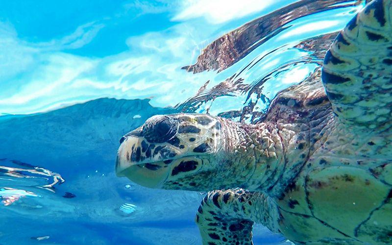 ランチの後はウミガメに高確率で会えるスポットへ