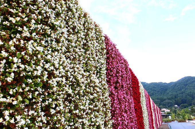 富士と花を愛でる時間