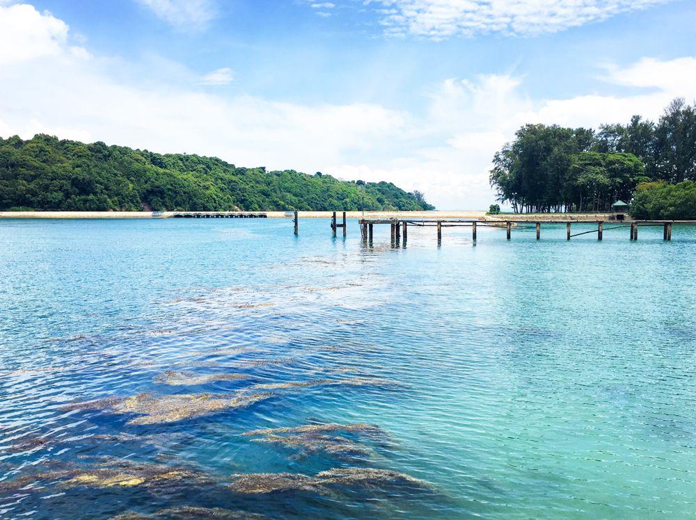 シンガポールの猫島「セントジョーンズ島」