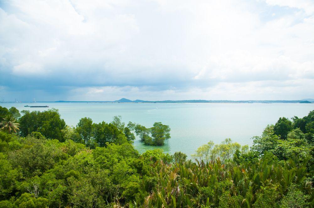 目の前はマレーシア!マングローブを探検