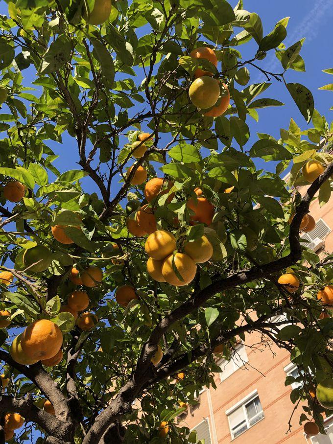 バレンシアはパエリア発祥の地