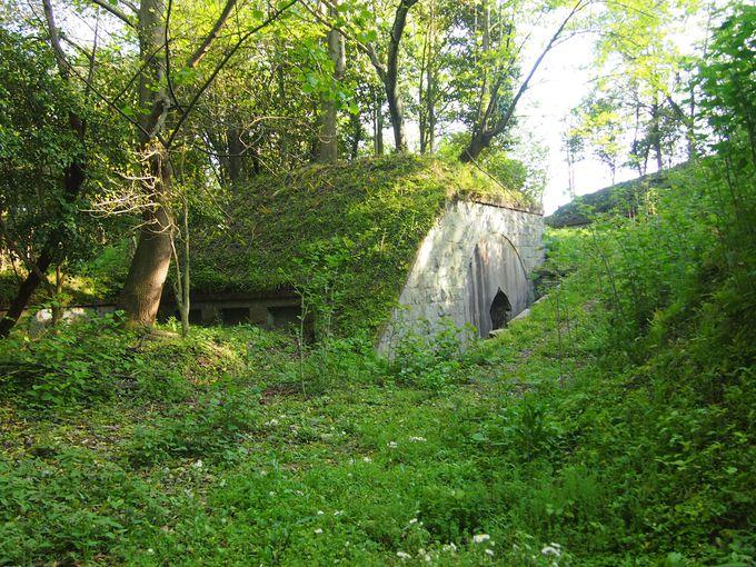 そこは小さな軍艦島 木々に隠された砲台跡