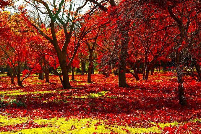 もみじと楓が色づくパワースポットの森