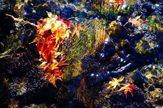 4種の紅葉に囲まれた能舞台 文化の秋を演出するなら年間イベントとの組合せが◎