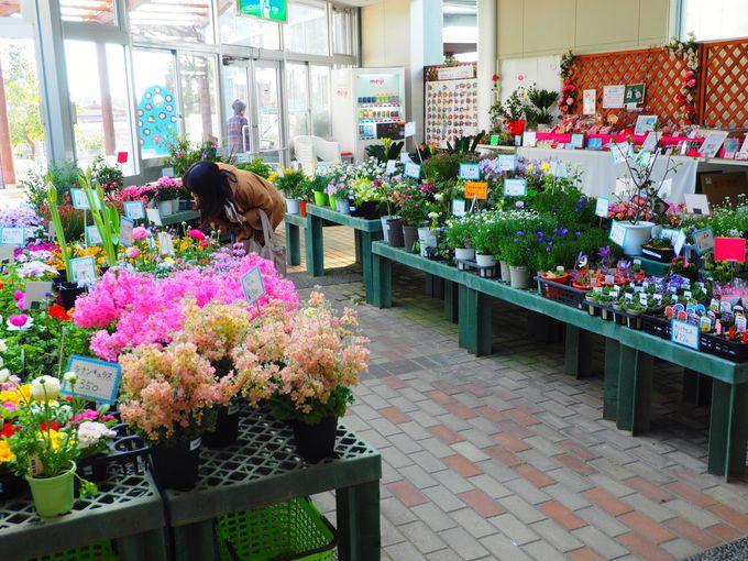 館内では椿の苗木販売や花卉の販売、ツバキの展示物も